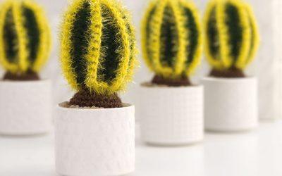 Cactus-book127644